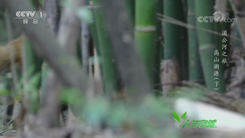 《人与自然》 20200908 湄公河之旅——高山溯源(下)