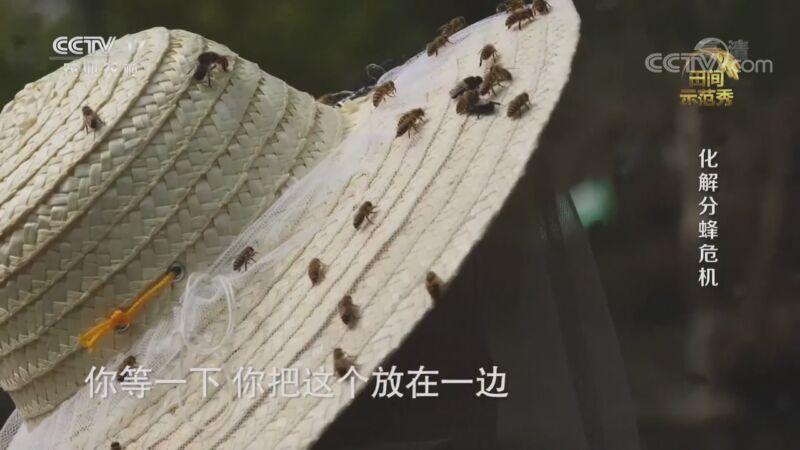 《田间示范秀》 20200918 化解分蜂危机