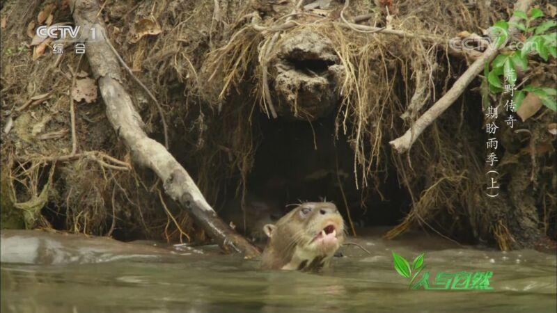 《人与自然》 20200919 荒野传奇——期盼雨季(上)