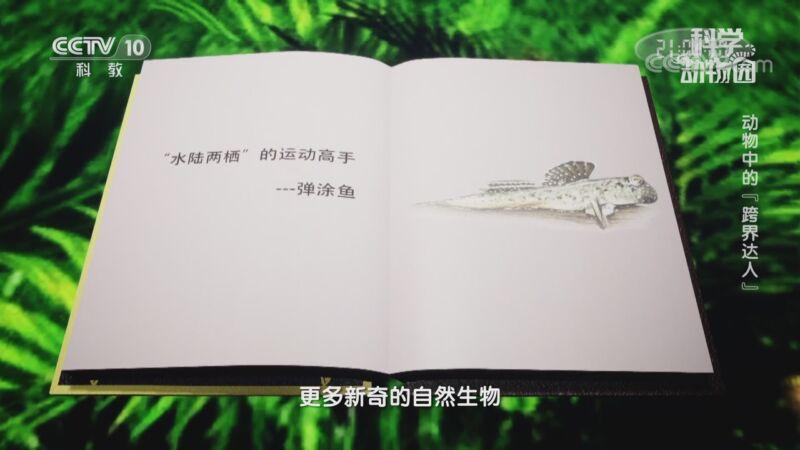"""《科学动物园》 20200919 动物中的""""跨界达人"""""""