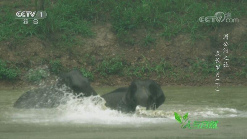 《人与自然》 20201002 湄公河之旅——成长岁月(下)