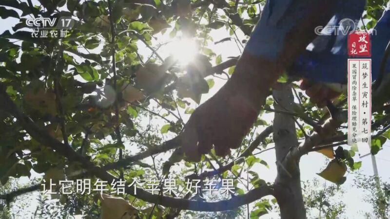 《攻坚日记》 20201006 筑梦生寅村(7)