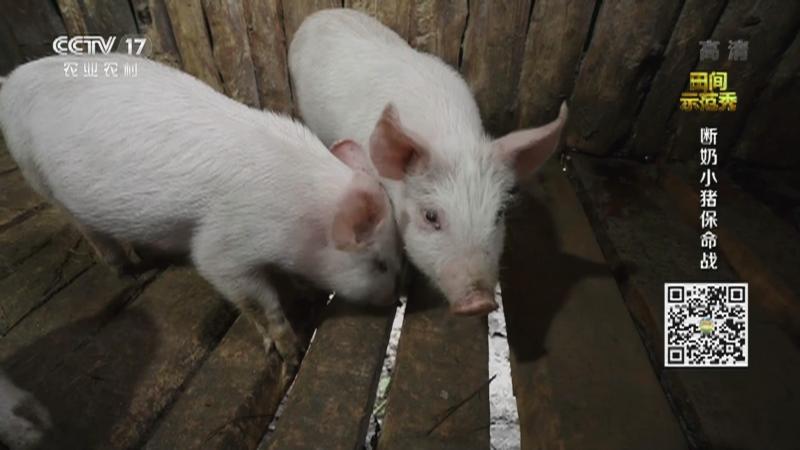 《田间示范秀》 20210127 断奶小猪保命战