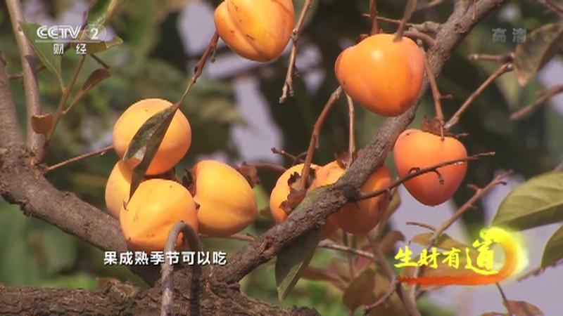 《生财有道》 20210316 乡村振兴中国行——河南渑池:火红的日子财富多