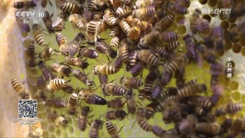 《创新进行时》 20210326 手机养蜂
