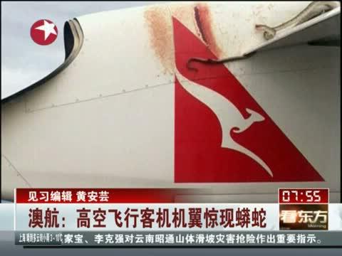 高空中飞机机翼惊现蟒蛇吓坏乘客