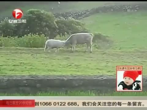 XM专题策划_小绵羊的决战之心 00:01:09