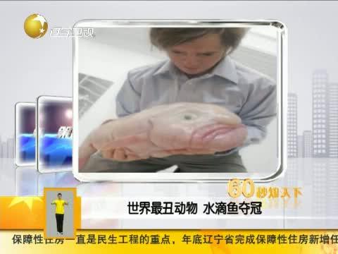 世界最丑动物 水滴鱼夺冠