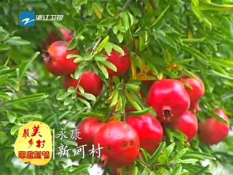 [浙江新闻联播]特别策划:到最美乡村 享受丰收时节 20131020