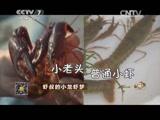 赵芳明小龙虾致富经,虾叔的小龙虾梦