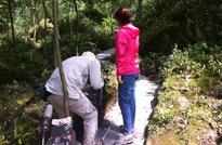 贵州赤水,在拍摄种在石头上的金钗石斛