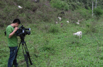 酉阳深山中拍摄酉州乌羊