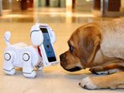 电子宠物狗