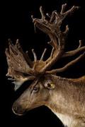 细数世界上最后的珍稀物种