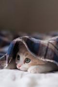 可爱动物图片