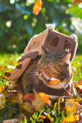 《龙猫》有爱粉丝制作现实版猫BUS