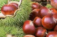 板栗种植与储藏技术