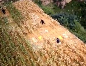 悬崖上种玉米的一家人