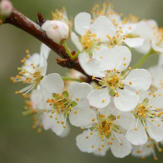 春天,与花的约会