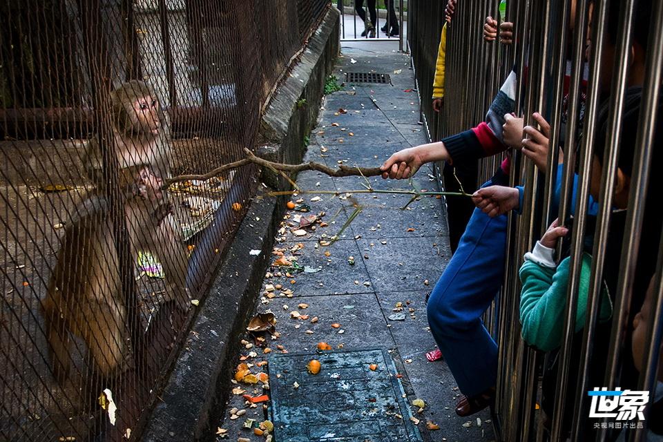 深圳某公园内的动物园