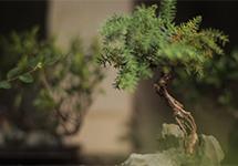 CCTV9纪录片《园林》全8集 1080P 中文 百度网盘下载  历史与艺术
