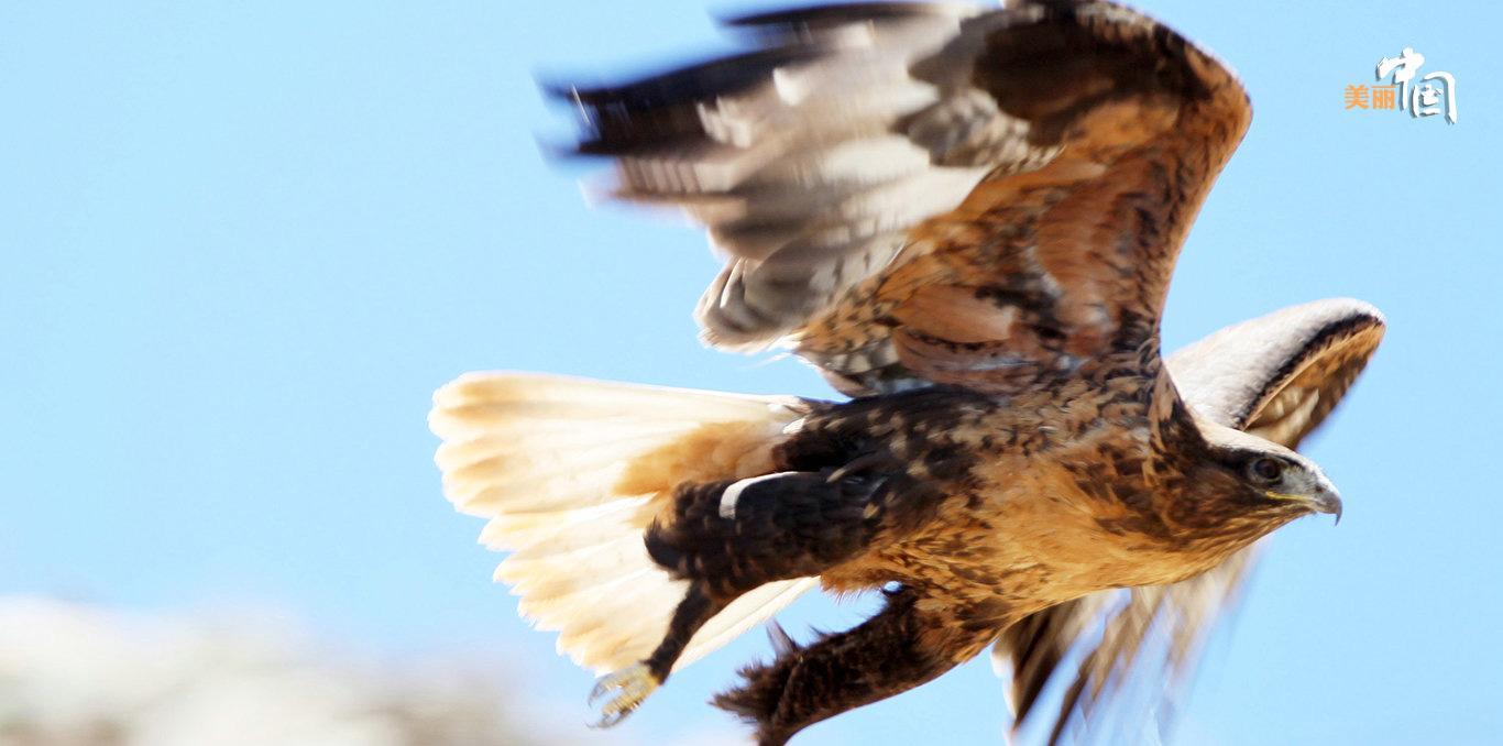 国家一级保护动物,也是列入《植种国际濒危野生动物