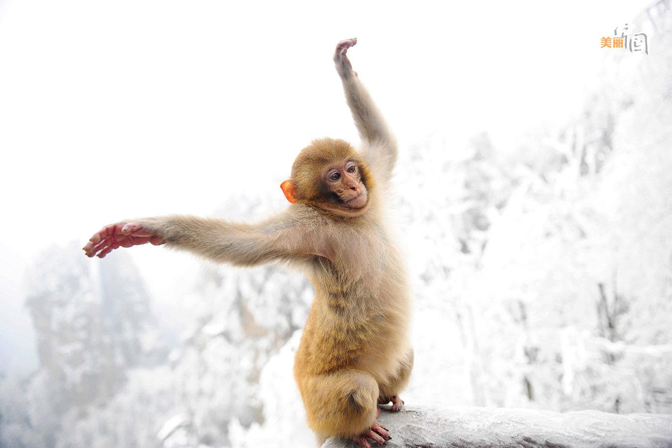 猕猴属于国家几级动物