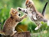 一击必杀!宠物对战异常激烈