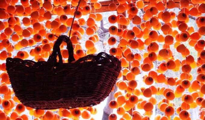 秋天的故事 霜降的柿子