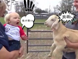 """当小Baby遇到小羊羔:""""斗嘴""""不忘争""""萌主"""""""