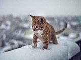 下初雪啦!各路动物来撒欢儿