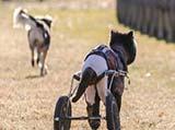 尽情玩耍 坚强生活 残疾动物的快乐日常