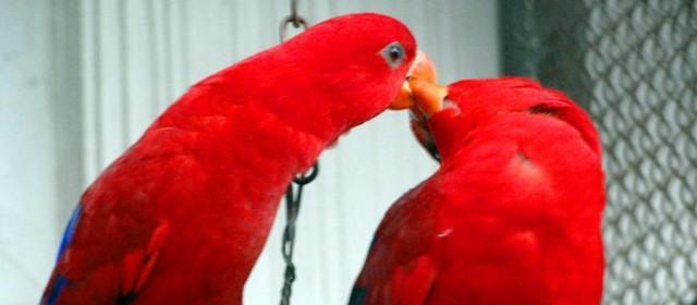 鹦鹉的浪漫情人节