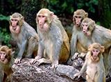 猴哥很忙!丙申猴年人气旺
