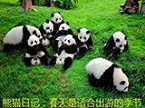 熊猫日记:春天是适合出游的季节