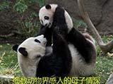 细数动物界的母子情深