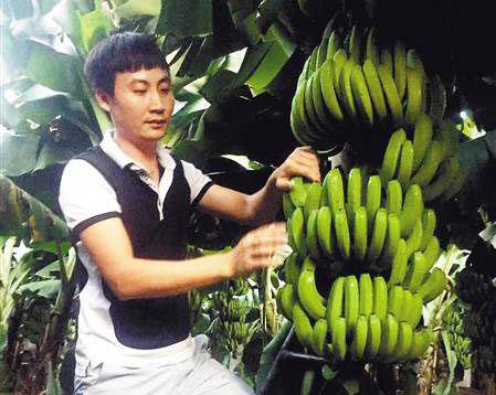 """姜东海:80后""""香蕉大王"""""""