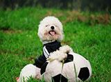 欧洲杯来了 看看动物界的玩球高手