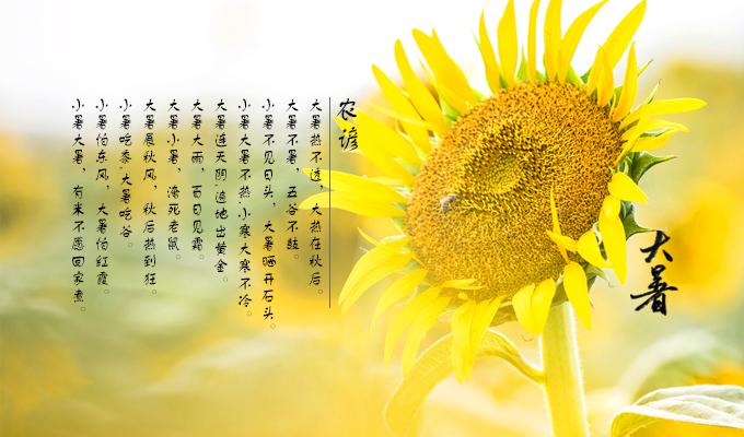 有关大暑的谚语与农事诗