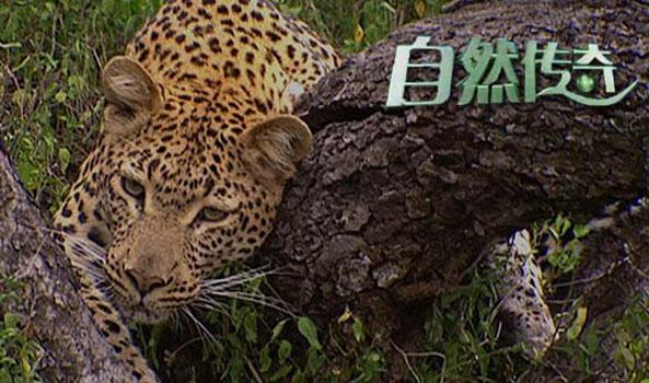 动物传奇致命动物