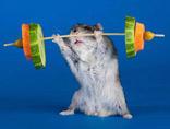 盘点动物界令人惊艳的运动健儿