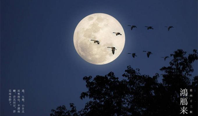 白露节气三候:鸿雁来 元鸟归 群鸟养羞