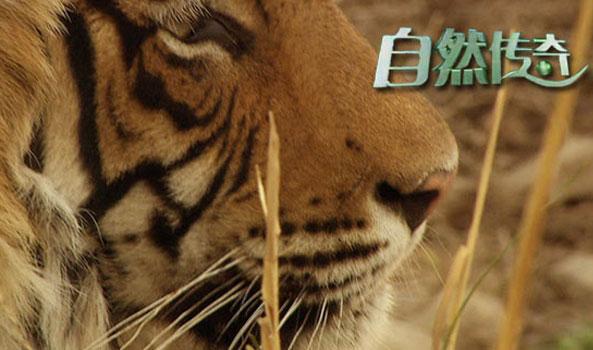 cctv10《自然传奇》2016年9月5日15:31播出  《动物欢乐时刻》