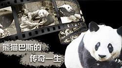 """大熊猫""""巴斯""""的传奇一生"""