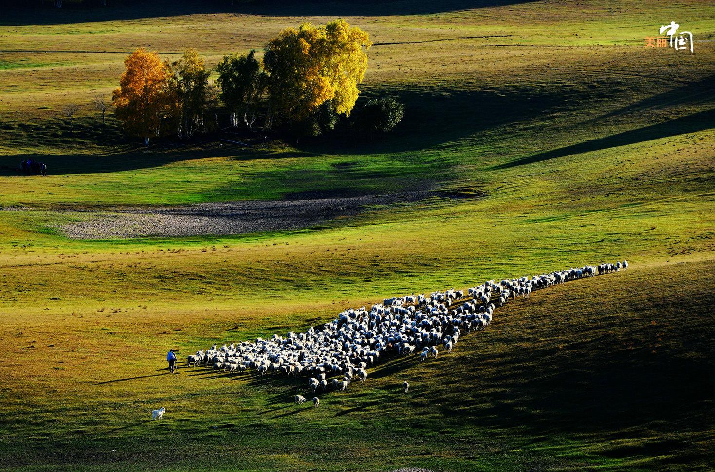 它由塞罕坝国家森林公园,御道口草原森林风景区和红松洼国家自然保护