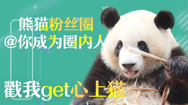 熊猫频道APP火热升级