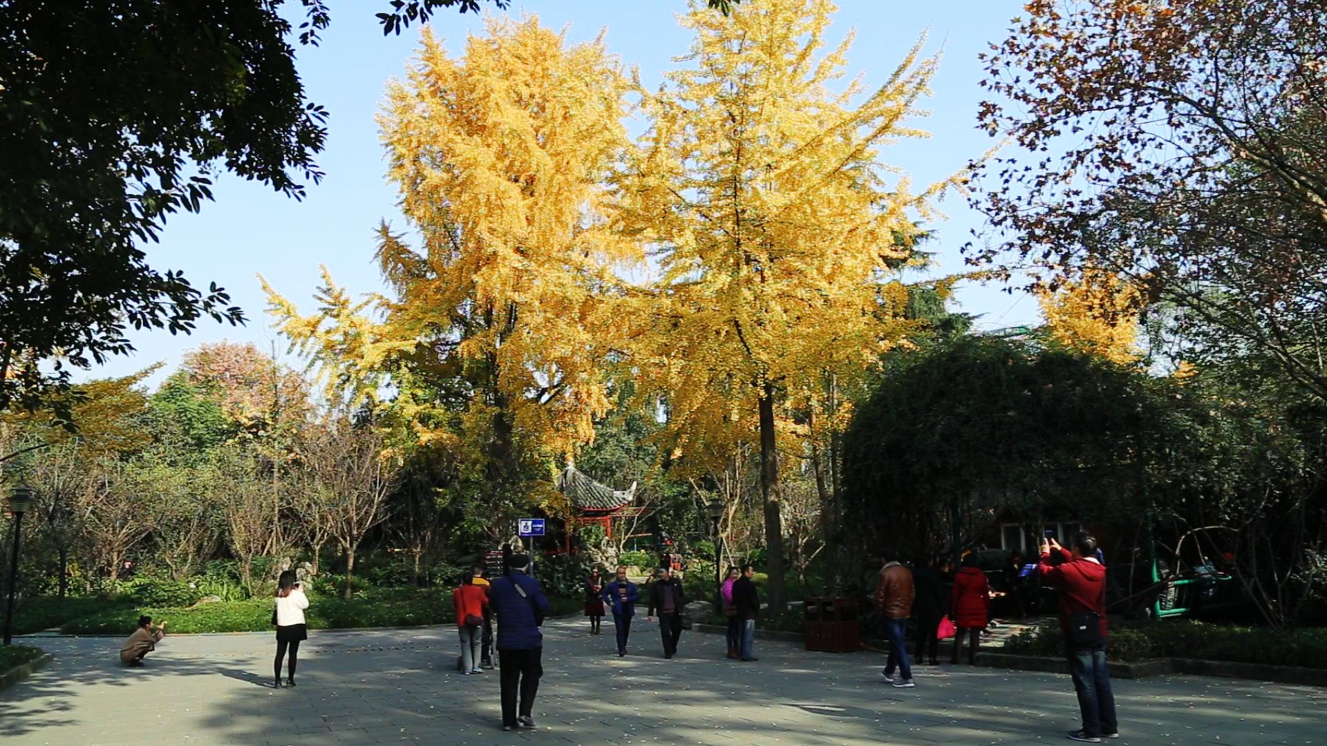 漫观成都市文化公园【2月14日】