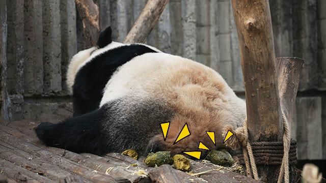 量产多少青团才是好熊猫?