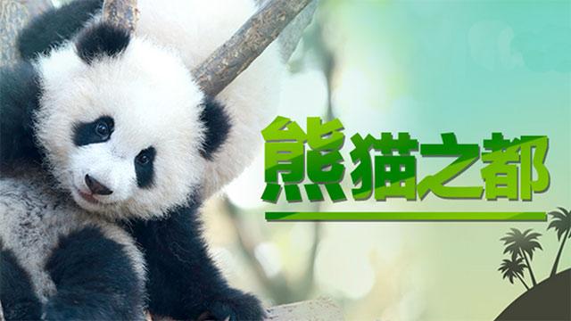 """成都将打造""""熊猫之都"""""""