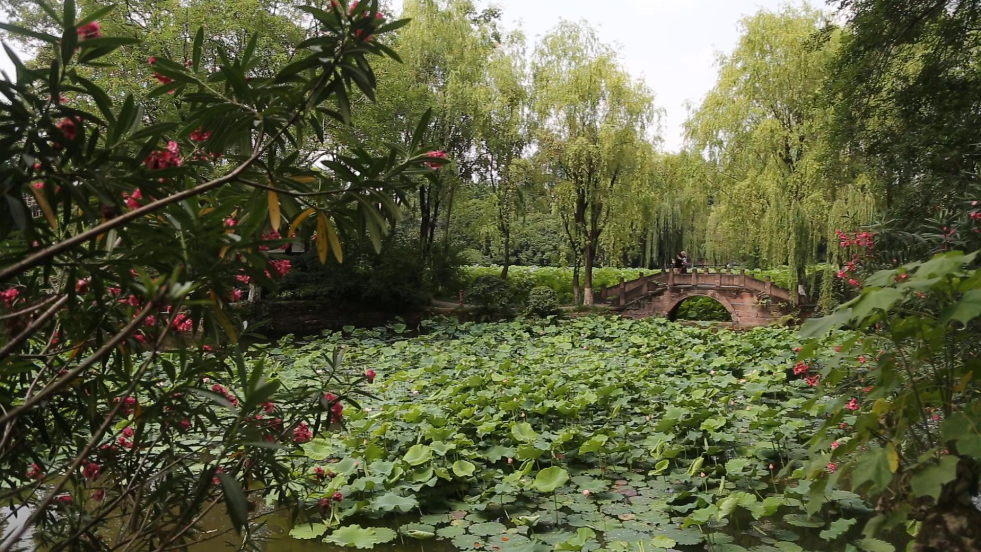 漫观桂湖公园[8月28日]